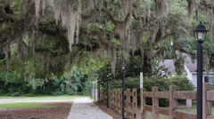sidewalk spanish moss lamppost sidewalk - stock footage