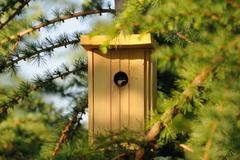 Little nest box for tomtit on larch tree Stock Photos