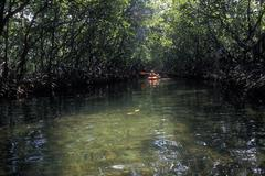 Kayaker, Everglades national park, Florida Stock Photos