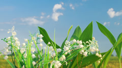 The lily of the valley on the cloud background Stock Footage