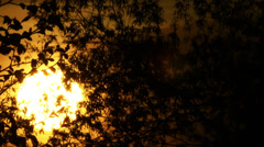 Sunrise   of yellow sun and tree.   time lapse clip Stock Footage