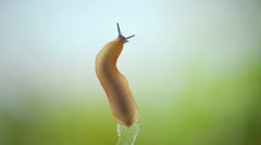 Slug slow movement on blue and green background Stock Footage