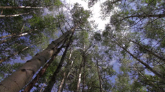 A rotating camera shot low angle up through leaves of Aspen Trees with sun flair Stock Footage