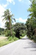 Road with coconut trees. Stock Photos