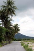 road with coconut trees. - stock photo