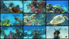 Video Wall Turtle Swimming over Coral Reef Stock Footage