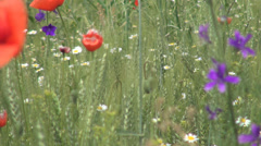 Meadow with many wild flowers, Splendid background with wild nature Stock Footage