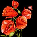 Stock Illustration of Bunch of Beautiful Red Poppy vector illustration
