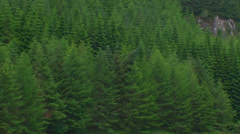 Loch from detail of spruce forest (conifers) on the opposite shore  Zoom out - stock footage