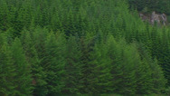 Stock Video Footage of Loch from detail of spruce forest (conifers) on the opposite shore  Zoom out