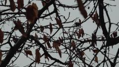 Trees On The Wind, Autumn Season, Rainy day - stock footage