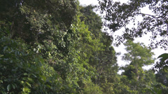 Monkeys jumping on the trees, Lombok island, Indonesia, Asia Stock Footage