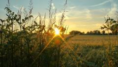 Sunset contryside skyline natural background Stock Footage