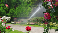 Stock Video Footage of Watering the rose garden.