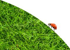 Ladybug sitting on a green grass Stock Photos