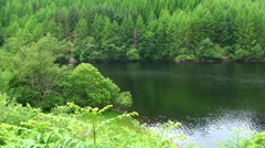 Spruce forest and ferns populating a loch shores Stock Footage