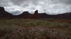 Wild cacti blossoms dramatick clouds strong wind hurrah pass utah landscape Stock Footage