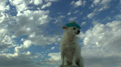 Dog Watcher On Vacation Stock Footage