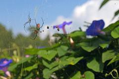 spider and prey over flowers - stock photo