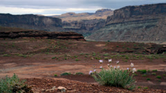 Wild flowers hurrah pass trail moab utah Stock Footage