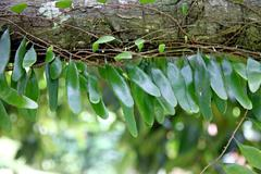 Small green leaves stuck in branches of tree. Stock Photos