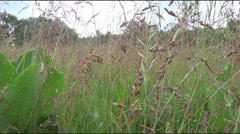Saxicola rubetra on the bush Stock Footage