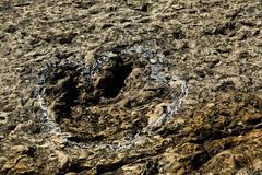 Dinosaur fossil trackways Stock Photos