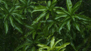 Stock Video Footage of closeup green plants in tropical rain shot in 4K