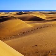 Stock Photo of natural reserve of dunes of maspalomas, in gran canaria, spain