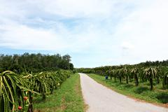 on the way of fruit orchards - stock photo