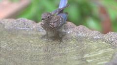 Bluebird Baby Stock Footage