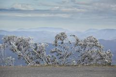View of trees covered with snow, mountains in background, Mt Hotham, Victoria, Stock Photos