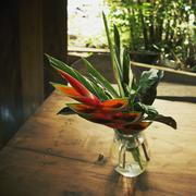 Fresh bird of paradise and leaves in flower vase on table Stock Photos