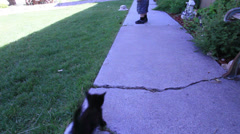 2 year old walks away with a black kitten following-HD_P-4151 Stock Footage