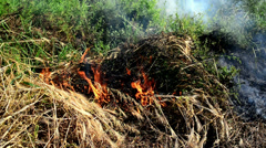 Stock Video Footage of Summer grass is burning in wildfire, natural disaster.