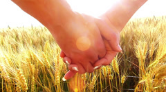 Stock Video Footage of Young couple walking across the wheat field