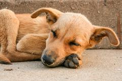 Young stray dog sleeping - stock photo
