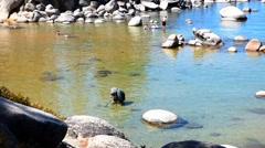 Children Playing, Metal Detecting Lake Tahoe Stock Footage