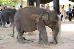 small elephant in zoo - stock photo
