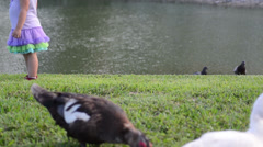 Horizontal textures with some gestures kid standing and muscovy duck eating f Stock Footage