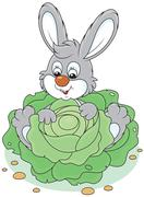 Bunny with a cabbage Stock Illustration