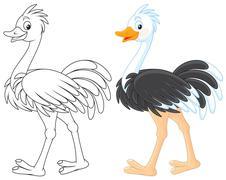 Ostrich - stock illustration