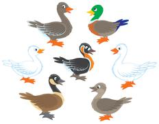 Ducks and geese - stock illustration
