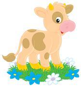 Calf Stock Illustration