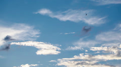 A lot of swallows are flying in blue sky Stock Footage
