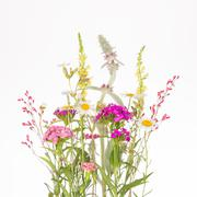 wildflowers with thin stems - stock photo