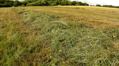 Dry grass on meadow in farmland bellow hill. Stalks are shaiking in wind Stock Footage
