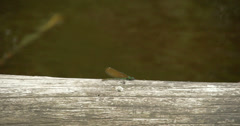 A dragonfly sticking on the wood 4k fs700 odyssey 7q Stock Footage
