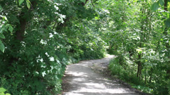 Beltline Trail in Green Forest - no people Stock Footage