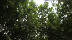 Drive under trees 1 30 Stock Footage